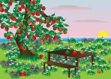 Apple. Imagen de archivo libre de regalías