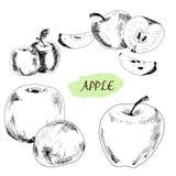 Apple. ilustracja wektor