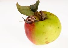 Apple-4. Apple with snail. Studio light Stock Photos