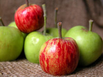 Apple. Red and green apples Stock Photos