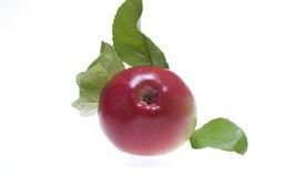 Apple. An red apple with leaf Stock Photography