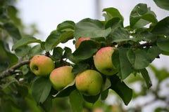 Apple Stock Afbeeldingen