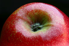 Apple. Detail of a bright red apple with focus on the flower and on the fruit's fine texture stock images