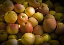 Free Apple Stock Photo - 8545980