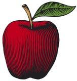 Apple ilustracja wektor