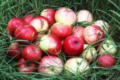 Apple Στοκ Εικόνα
