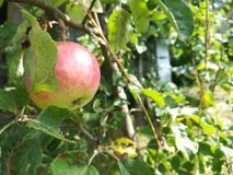 Apple Fotos de archivo