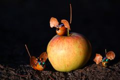 Apple acorn mouse figure forest day light. Apple acorn mouse figure handmade forest stock image