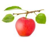 Apple aisló imagen de archivo libre de regalías