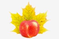 Apple&Maple Royalty-vrije Stock Foto's