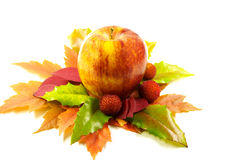 Free Apple And Leafs Autumn Stock Photography - 16624512