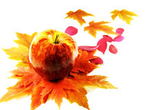 Free Apple And Leafs Autumn Stock Photography - 16624522