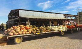 An Apple Annie's Flat Bed Full of Pumpkins Royalty Free Stock Image