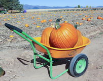 An Apple Annie's Pumpkin Barrow with Two Pumpkins Stock Photo