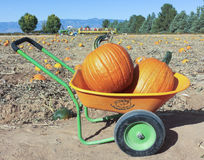 An Apple Annie's Pumpkin Barrow with Two Pumpkins Royalty Free Stock Photo
