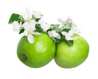 Apple and apple blossom Stock Images