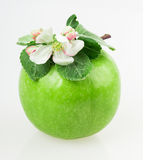 Apple and apple blossom Royalty Free Stock Photo