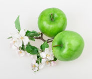 Apple and apple blossom Royalty Free Stock Photography