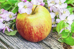 Apple with apple blossoms on rustic wood Royalty Free Stock Photo