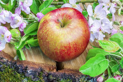 Apple with apple blossoms on wood Stock Photo