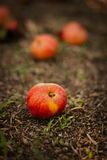 Apple. With a blurry background Royalty Free Stock Image