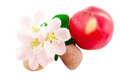 Apple, apple flowers and stones Stock Photos