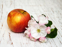 Apple and apple tree blossoms Royalty Free Stock Photos