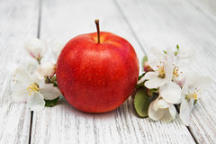 Apple and apple tree blossoms Stock Image