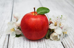 Apple and apple tree blossoms Stock Images
