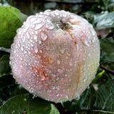 Apple après pluie Images libres de droits