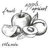 Apple and apricot fruit group set hand drawn vector illustration sketch Stock Photo