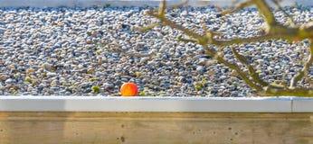 Apple auf dem gefrorenen Dach einer Halle im Sonnenlicht Lizenzfreies Stockfoto
