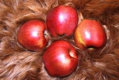Apple auf Pelz Stockfotos