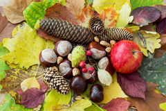 Apple, autumn leaves, horse chestnut, pine cones, rosehip and nu Royalty Free Stock Photography