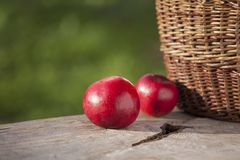 Apple in autumn on table with basket detail. Fresh two apples in autumn on wooden deck table with basket detail and natural lihting Stock Photography