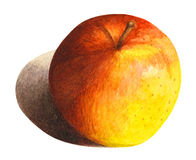 Apple avec l'ombre dans l'aquarelle Photographie stock libre de droits