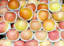 Apple background. Lots of red apples,each apple has a white sheath Royalty Free Stock Photos