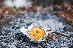 Apple baked on coals in the evening royalty free stock photos