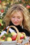 Apple basket Stock Photography