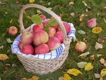 Apple basket Stock Photos