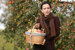 Apple basket Stock Photos