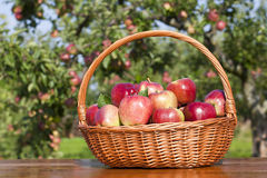 Apple basket Royalty Free Stock Images