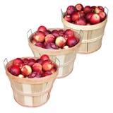 Apple basket Stock Image