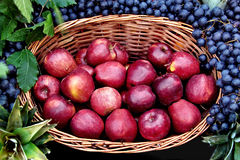 Apple basket. Beautiful fruit arrangement with red apple and grapes Stock Photo