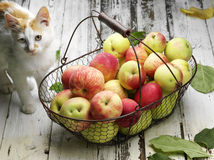 Apple basket and cat Stock Photography
