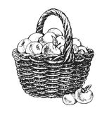 Apple basket drawing Stock Photo