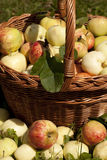 Apple in basket Stock Photo