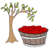Apple Basket Royalty Free Stock Photography