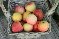 Apple in basket Royalty Free Stock Photos