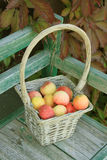 Apple in basket Stock Photography